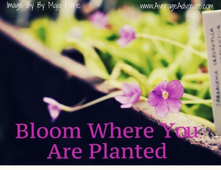 Bloom Where You Are Planted www.AverageAdvocate.com